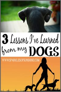 3 Lessons I've Learned from my Dogs at Sparkles of Sunshine. What can your pets teach you?