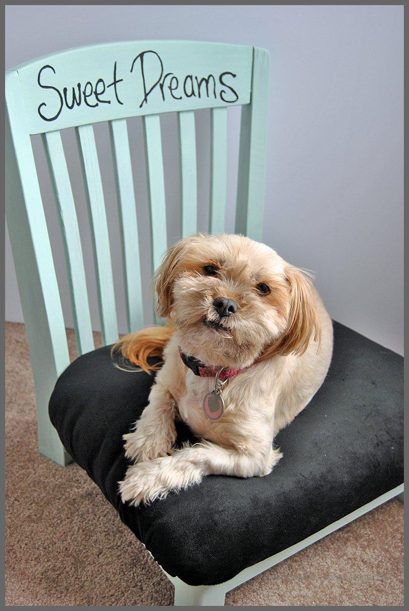 Diy Dog Bed Easy