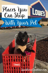 Want to take your furry friend along on shopping day? Check out this list of 7 stores that let your pet shop with you.