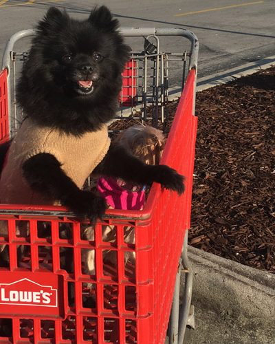 7 Stores That Allow Your Pets to Shop With You