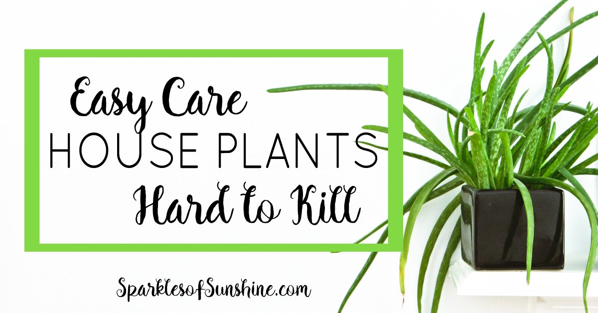 Easy care house plants that are hard to kill sparkles of for Easy to take care of plants