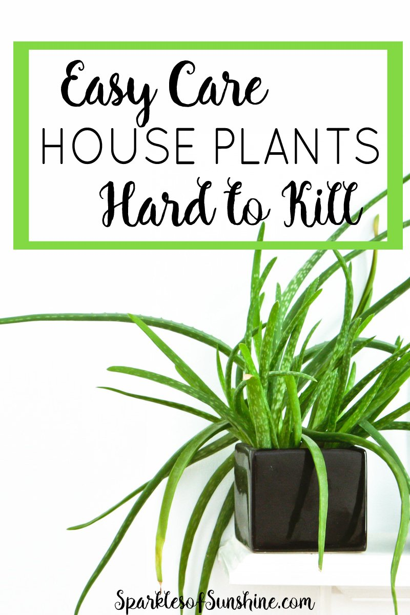 Easy care house plants that are hard to kill sparkles of for Easy plants to care for