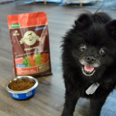 Improve Your Pet's Mind, Body & Soul With a 10-Day Detox